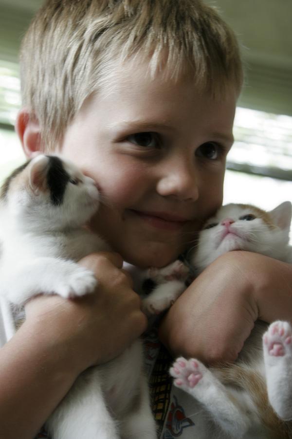 Paisley kitty