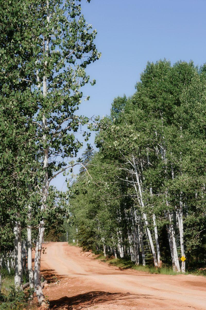 Cabin landscape
