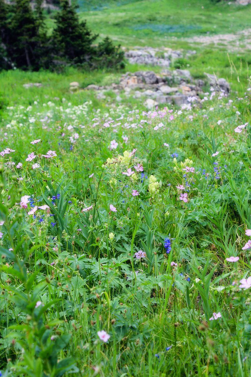 Wildflowers 4x6