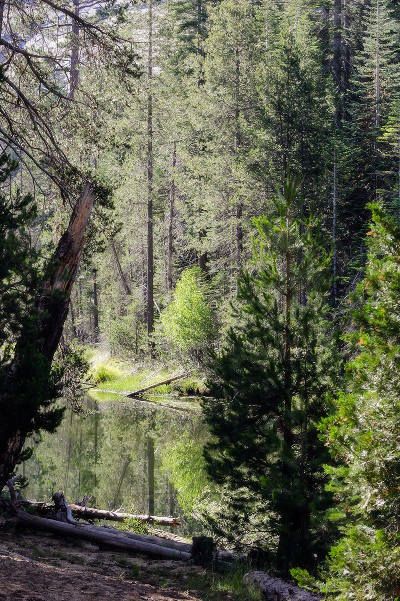 No04merced river reflection