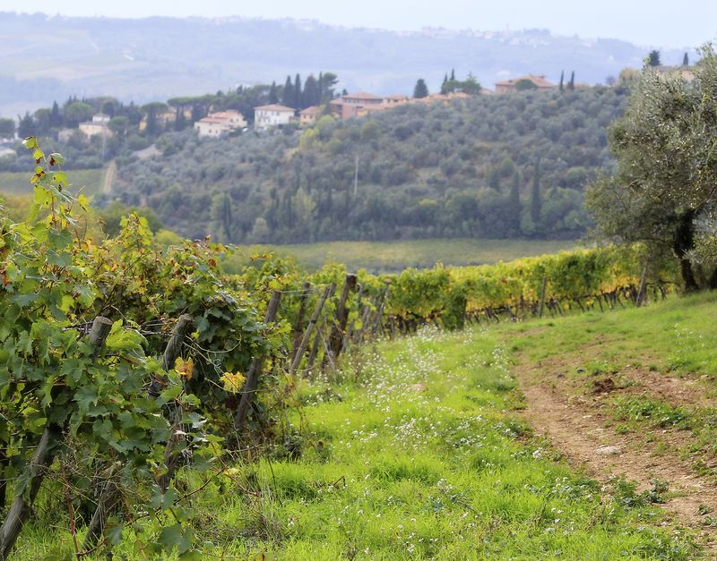 Tuscan vineyard small amy sorensen