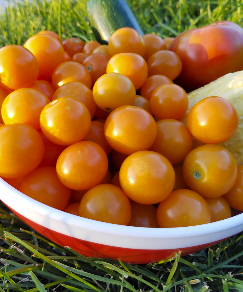Orange cherry tomatoes