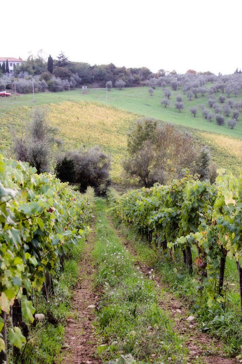 _MG_0974 tuscany