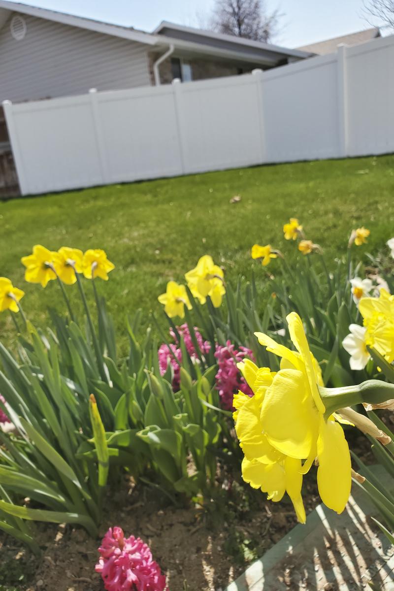 20200404_112554 spring in the garden 4x6