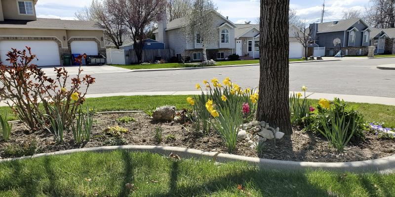 20200404_151322 spring in the garden