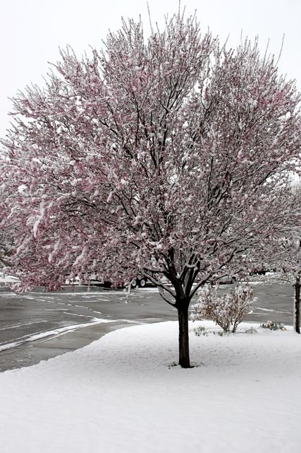 Spring_snow_2